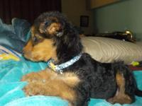 We provide for your home,World Class Airedale