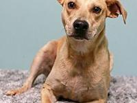 "AJ's story ""AJ"" is a male terrier mix, around 2-3 years"