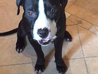 Ajax's story Ajax is a sweet 1.5 year old boy that