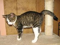 Ajay (baby boy)'s story Meet Ajay a brown tabby with