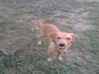 I have a female Golden she will be 10 months old on the