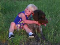 German wirehaired guideline puppy searching for the
