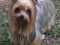 I have a gorgeous Proven AKC yorkie stud 2 1/2 lbs.