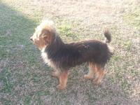 Adorable 1 year old 4 pound Yorkie male. He is a very
