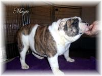 I have decided to put Magic up for sale. She is a