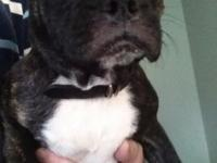 We have a very cute female adult French Bulldog that we