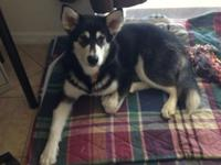 Beautiful, loving female 6 mths old, crate trained,