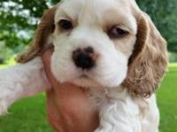 3 beautiful boys available ~ 8 weeks old ~ Jed;