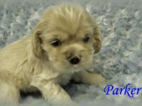 I have beautiful Cocker Spaniels for Sale. I have a