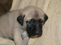 We have 4 female and 2 male young puppies available for