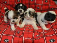 we have two sweet little litters we have 5 boys and 3