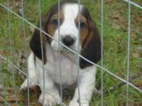 I have 4 (1 Female and 3 Males) loving basset hound