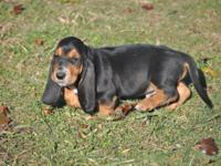 Take a look at this Stunning Basset hound Boy! Otto is