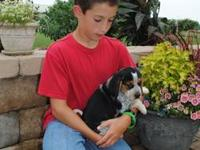 Demetrius is a beagle from a litter of seven