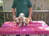AKC full registration. Both males. They are very