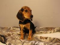 *******only 1 left (female)!!!!!***** she is really