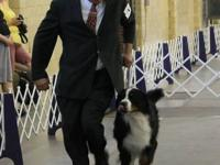 Available 3 Gorgeous Berner Female Pups. Sire son of