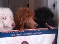These pups are the last of my litter born on January 5,