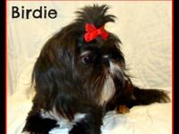 Birdie is a beautiful black and white, who has silvered