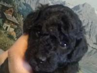 This is one adorable little puppy. He is coal black.