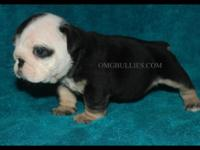 We have this beautiful black tri triple carrier female.