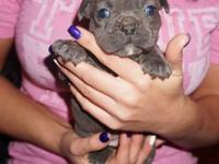 Luda and Nikki's puppies are here. Born September 25,