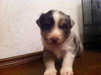 Patch is a sweet young puppy that enjoys to be