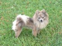 I have two adult female Poms I have actually decided to