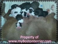 We keep our young puppies minimum of 8 weeks. If we