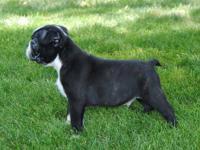 We have an outstanding AKC male available to a great