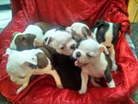 I have 3 dogs to offer for sale at this time. All are