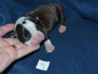 Kool-aid kennels has a new litter of puppies! Puppies