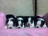 We have 1 puppy left one male black and white for $600