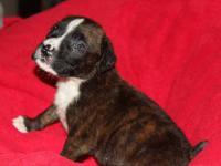 Meet Duece! Duece is a very sweet puppy is very loving