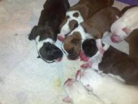 2 boxers left we have a male and female. They will be 8