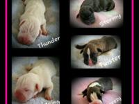 Puppies born: 5/17/15 Pending DM testing results on