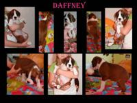 "Ok up for grabs and 8 weeks old today is "" Daffney "" a"