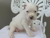 This is a lovable all white female fighter. She is AKC