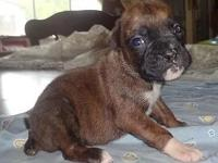 Lexus is a Brindle female she is active for her age and