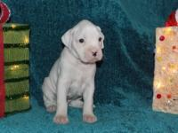 Have 2 flashy fawn males, 1 all white male one powder