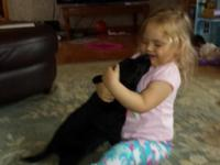 Looking for a great Black Lab puppy for hunting or just