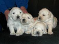 Taking deposits on puppies born Jan. 7, 2013. Father is