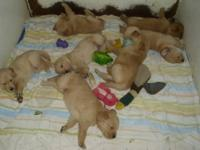 WE HAVE 2 LITTERS OF PUPS DO.. THE FIRST WAS BORN ON