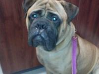 Akc reg male just 2 yrs old he is neutered and utd on