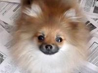 $600.00 is her pet price sold on limited akc, if