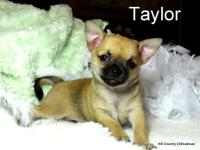 Taylor is a charming fawn, black masked male AKC