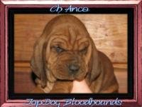 Here at Top Dog we have done this special breeding.Pups