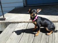 Sweet black and tan female needs forever home. Update