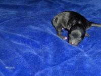 i have 5 puppies born Sept. 26th 2012 they will not be