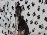 Dixie is a sweet and outgoing little girl. She has been